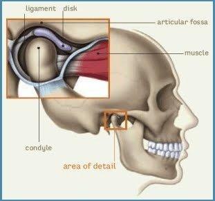 Qué es la articulación temporomandibular