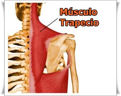 causas de contractura del musculo trapecio