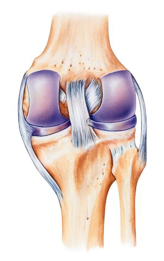 Articulación rodilla ligamentos
