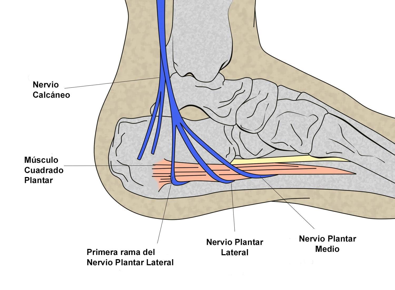 Nervios del tobillo